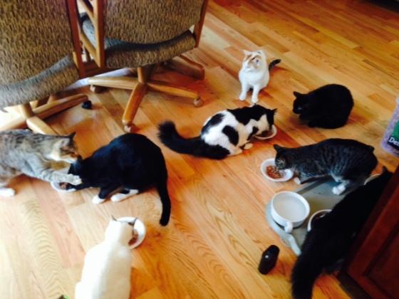 rNSY CATS